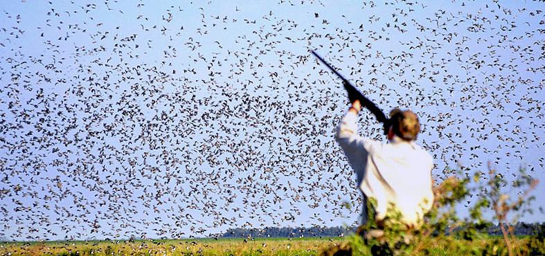 După trei ani de liniște, aeroporturile reîncep vânătoarea de ciori