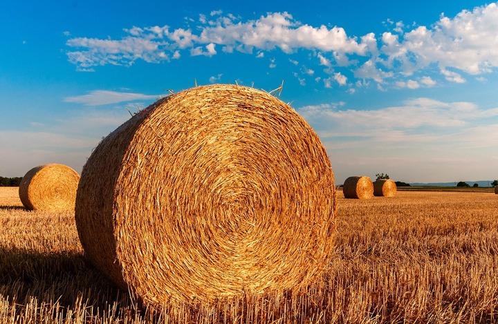 BEI ar putea acorda Agricover Credit IFN un împrumut de 20 mil. euro pentru finanțarea IMM-urilor