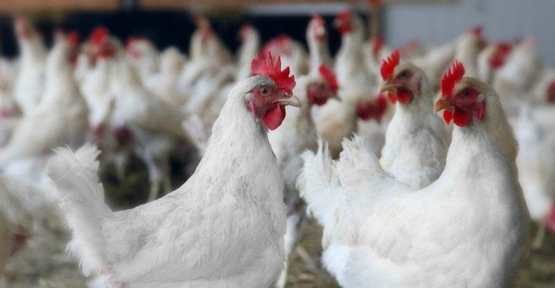 Hong Kong interzice importul de carne de pasăre și ouă din România din cauza gripei aviare
