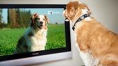Câinii din România ar putea avea o televiziune dedicată, începând din 2017