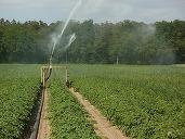 Finanțe: Cum se aplică TVA de 9% în agricultură, de la 1 august