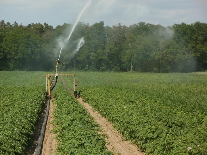 Finanțe: Cum este aplicată TVA de 9% în agricultură, de la 1 august