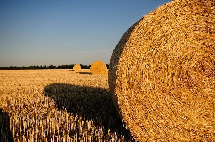 ANALIZĂ Fermierii români nu profită decât în mică măsură de recoltele-record din 2016 din cauză că nu au depozite