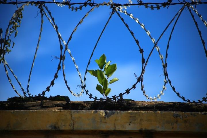Cărțile scrise de deținuți nu vor mai scurta decât cu 20 de zile închisoarea