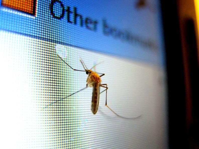 DOCUMENT Existența țânțarilor vectori pentru transmiterea virusului Zika a fost demonstrată în București, Primăria angajează fără licitație o firmă pentru dezinsecție