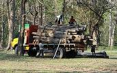 Pedepse mai dure în Codul Silvic: Persoanele prinse că fură copaci doborâți de vânt intră în închisoare până la 10 ani