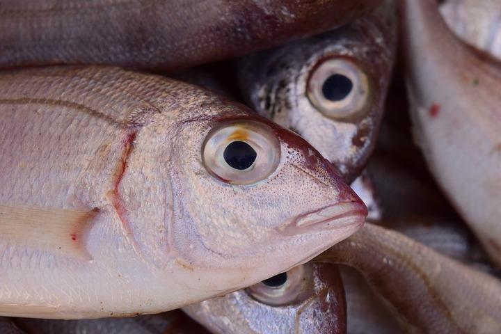 """În 35 de zile de """"dezlegare"""", românii mănâncă mai mult pește decât în tot restul anului. De unde este adus crapul"""