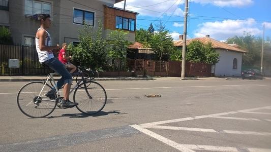 REPORTAJ: Cadavre de animale pe străzile din Ploieşti, după ce firma care trebuia să le ridice a suspendat contractul cu Primăria. Politicienii se acuză reciproc