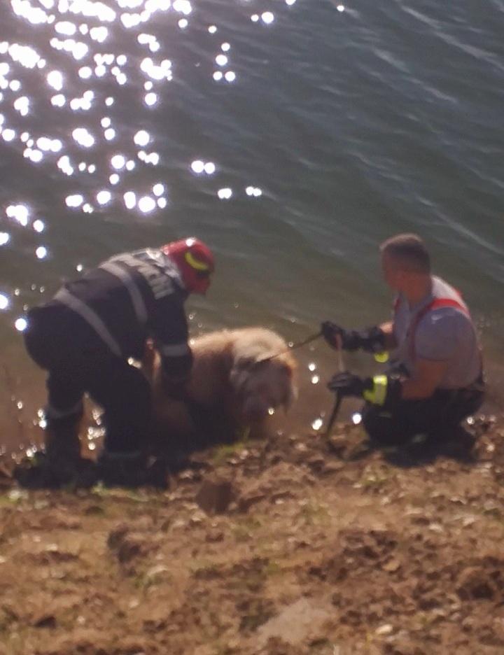 Intervenţie a pompierilor din Giurgiu pentru a salva un câine nevăzător, care căzuse într-un lac de agrement – FOTO