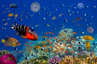 Peste 35% din Marea Barieră de Corali este distrusă ca urmare fenomenului de înălbire - studiu