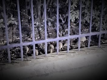 Principalele parcuri din Paris, închise din cauza şobolanilor