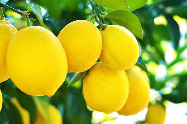 16437066 - lemons