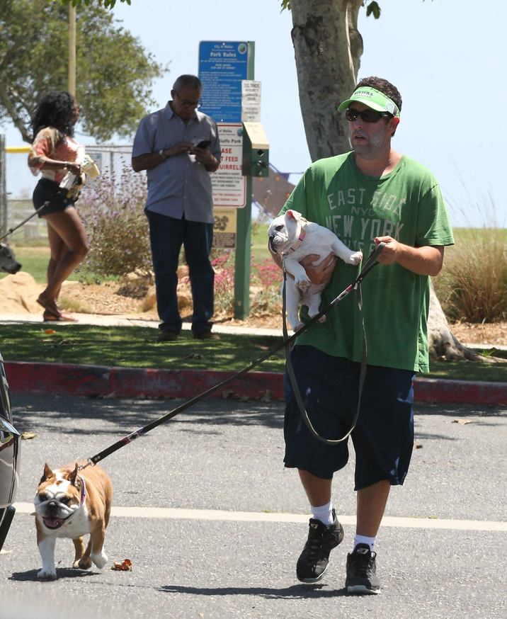 Exclusive... 52110756 Comedian legend Adam Sander seen with his family and dogs in Malibu, California on July 2nd 2016. Adam Sandler got into a scuffle with his bicycle when trying to pack into the trunk of his car and the handles accidentally got caught on the back of his green t-shirt. FameFlynet, Inc - Beverly Hills, CA, USA - +1 (310) 505-9876