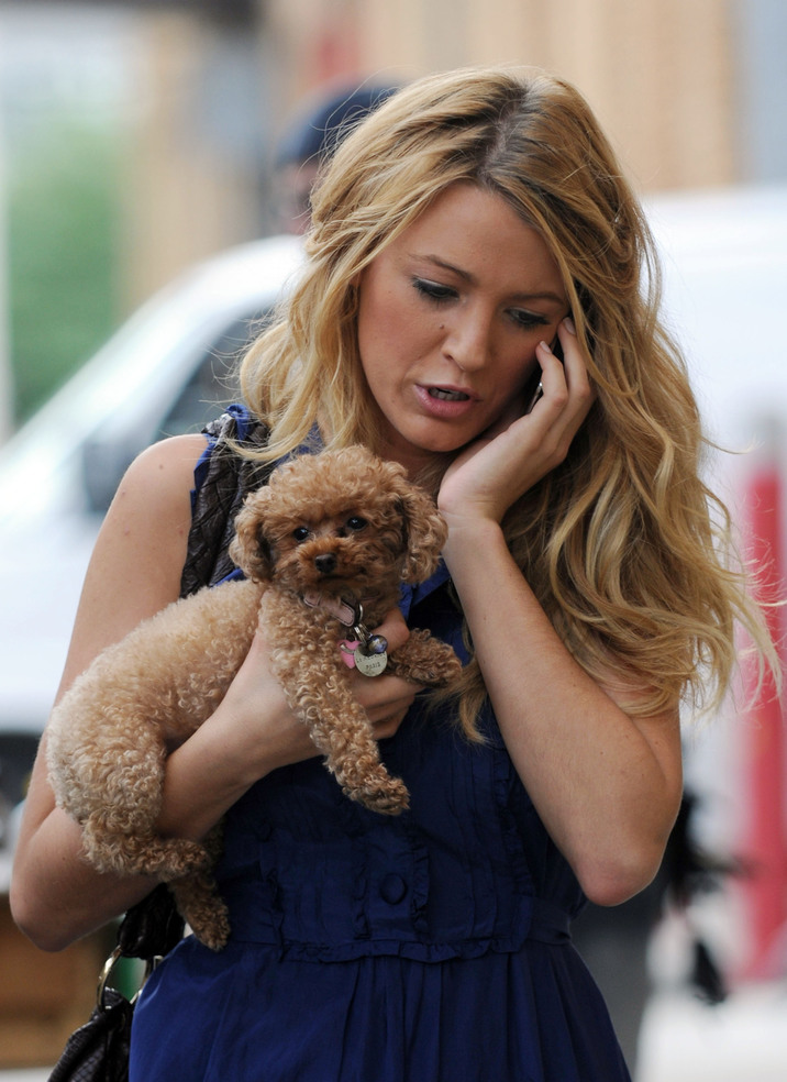 """Fame Pictures (310) 395-0500    Blake Lively, with her dog Penny, is pictured outside of Silvercup Studios in Queens, New York today where she is shooting scenes for her hit tv show, """"Gossip Girl.""""    CR: FPZ/Fame Pictures 07/24/2008 --- Blake Lively --- (C) 2008 Fame Pictures, Inc. - Santa Monica, CA, U.S.A - 310-395-0500 / Sales: 310-395-0500"""