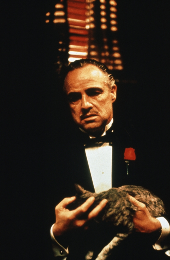 godfather-the-1972-001-marlon-brando-with-cat-00m-mbv