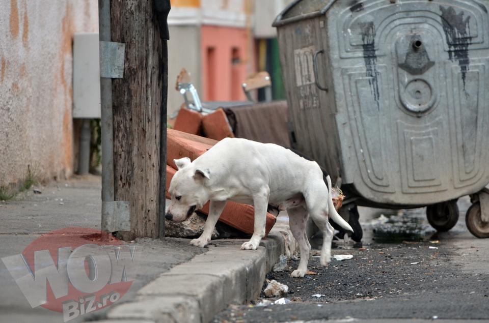VIDEO! La un an de la moartea lui Ionut Anghel - dovada ca tragedia se poate repeta oricand! Teroare in Bucuresti: pitbull infometat, lasat liber pe o strada unde se joaca un grup de copii!