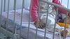 Legati cu sfori de pat si lasati sa planga pana la epuizare! Bebelusii din spitalele din Sibiu sunt torturati si chinuiti ca in Evul Mediu