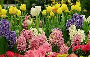 Traditii si superstitii de Florii. Ce este interzis sa faci in Duminica Floriilor. E mare pacat