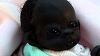 Cum arata acum cel mai negru copil din lume! Edam are aproape patru anisori si face senzatie in intreaga lume! Imagini incredibile!