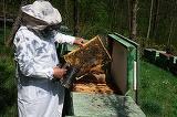 Doi frati apicultori din Iasi, atacati de albine! Unul din ei a murit