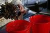 Nu mai bea NICIODATA apa sfintita! Un mililitru contine pana la 62 de milioane de bacterii