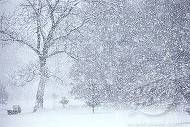 Cand va cadea prima ninsoare? Meteorologii au anuntat prognoza meteo pentru iarna aceasta