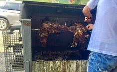 Politistul Marian Godina a starnit controverse cu aceasta fotografie. Cum se prepara protapul la...container