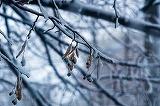 Ne asteapta o iarna grea! Meteorologii anunta viscol si ninsori abundente