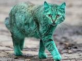 Misterioasa pisica verde din Bulgaria