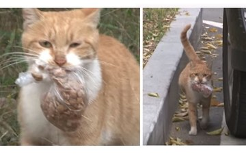 Povestea lui Dongsuk, pisica a strazii care nu accepta mancare decat la pachet, a facut inconjurul lumii