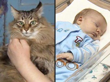 Masha, pisica maidaneza care a salvat viata unui bebelus. L-a gasit abandonat langa ghena si i-a tinut de cald pana a fost salvat