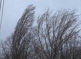 Vremea o ia razna! Avertizare METEO de vânt puternic pentru 15 judeţe, între care şi Capitala