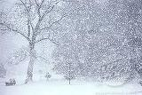 COD PORTOCALIU de VISCOL! Care sunt judeţele în care se vor înregistra ninsori abundente şi intensificări ale vântului