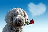 Mesaje de buna dimineata de Valentine's Day