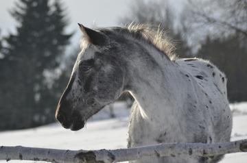 Interpretarea viselor: ce inseamna un cal in vis?
