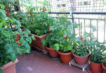 Nu ai curte? Iata ce legume poti creste in balcon!