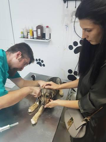 Ce caine adorabil a salvat Raluca Ogica! L-a gasit pe un santier si l-a dus direct la veterinar! Foto!
