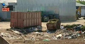 Mormane de gunoi langa fabrica de biscuiti! Aerul din Bragadiru e de nesuportat