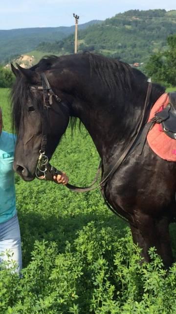 Fostul iubit al lui Bahmu isi vinde toate herghelia! Mihai Eghet ar putea scoate o avere pe caii lui! FOTO