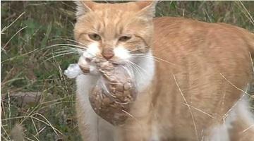 O pisica maidaneza primea mancare de la straini doar daca era intr-o punguta. Intr-o zi au urmarit-o si au vazut ce facea, de fapt, felina