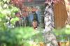 Cand vremea e frumoasa, Dan Chisu iese singur la terasa! A meditat si s-a relaxat la o cafea VIDEO EXCLUSIV
