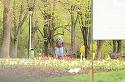 Videanu a iesit in parc sa vorbeasca afaceri la telefon, dar a fost speriat de ploaie!