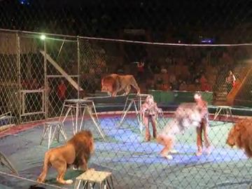 Imagini de groaza! Un dresor rus este atacat de leu in arena - Ii sfasie piciorul, dar reuseste sa se ridice si sa alunge fiara, apoi este atacat de alti doi lei - Nu vrei sa stii ce a urmat