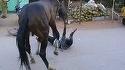 Un barbat din Botosani isi batea nervos calul, cand deodata... Animalul a inceput sa riposteze si l-a calcat in picioare! Detalii socante