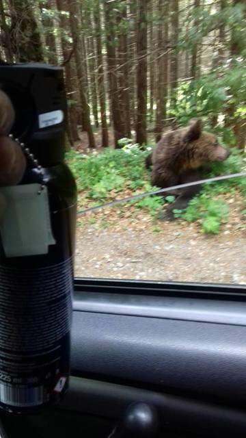 O turista a vrut sa isi faca un selfie cu un urs la Lacul Sf. Ana! Ce s-a intamplat imediat este socant!