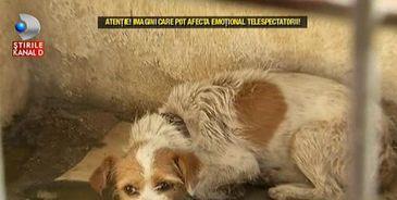 Uşi închise şi atitudini ostile! Asta gasesti la adăpostul public pentru câini din Tulcea! Imagini cu un puternic impact emotional