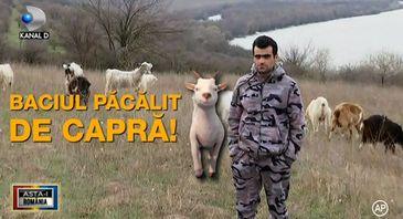 Baciul dobrogean, pacalit pacalit de capra: ba e capra, ba e tap. Cum este posibil asa ceva