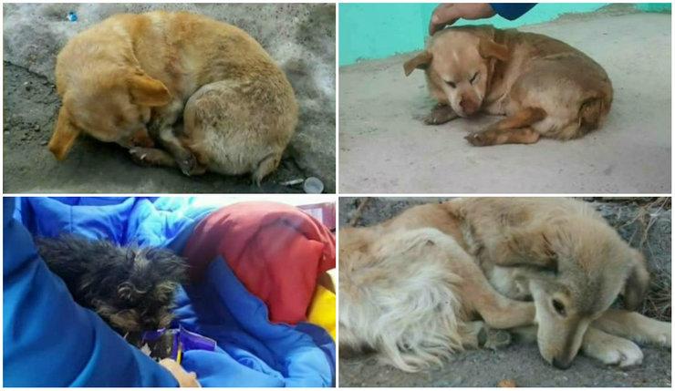Au fost abandonati si lasati sa agonizeze la marginea drumului! Au stat in frig zile intregi fara ca cineva sa ii ajute