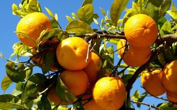 Au cules portocale sase luni cu pistolul la tampla. Povestile romanilor umiliti si abuzati in Italia