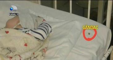 Ce solutie a gasit un medic de la spitalul din Neamt pentru a rezolva problema gandacilor care se plimba nestingheriti prin saloanele de pediatrie